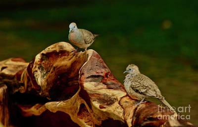 Photograph - Morning Doves by Craig Wood