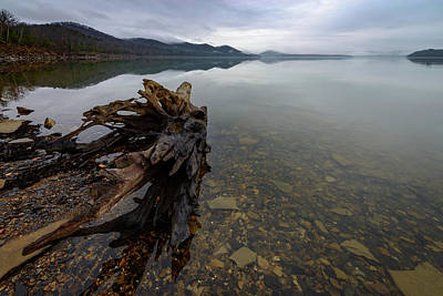 Artistic Landscape Photograph - Morning Driftwood by Michael Scott