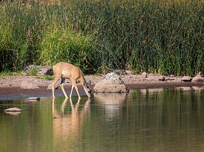 Photograph - Morning Drink by Loree Johnson