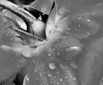 Photograph - Morning Drops by Al Swasey