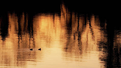 Art Print featuring the photograph Morning Ducks 2017 by Bill Wakeley