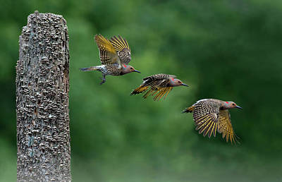 Photograph - Morning Escape by Art Cole