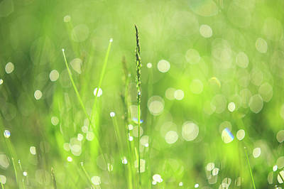 Photograph - Morning Fairies. Green World by Jenny Rainbow
