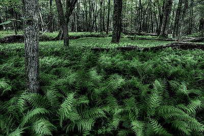 Photograph - Morning Fern by Mike Eingle