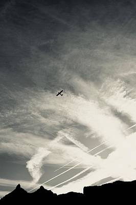 Photograph - Morning Flight by Colleen Williams