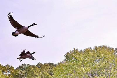 Photograph - Morning Flight Geese by Kim Bemis