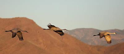 Photograph - Morning Flight by Jean Clark