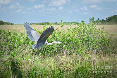 Photograph - Morning Flight by Judy Kay