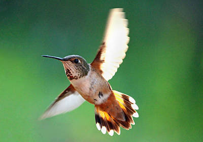 Photograph - Morning Flight by Rory Sagner