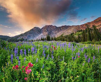 Morning Flowers In Little Cottonwood Canyon, Utah Art Print