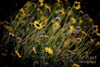 Art Print featuring the photograph Morning Flowers by Kelly Wade