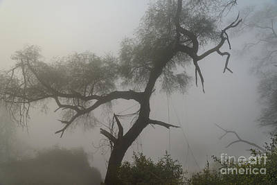 Photograph - Morning Fog At Bharatpur 02 by Werner Padarin