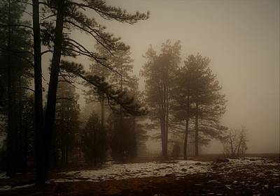 Photograph - Morning Fog by Broderick Delaney