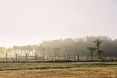 Photograph - Morning Fog by Fran Gallogly