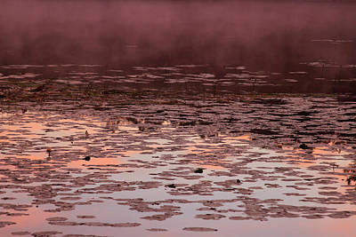 Photograph - Morning Fog In The Lily Patch In Mauve by Bonnie Follett