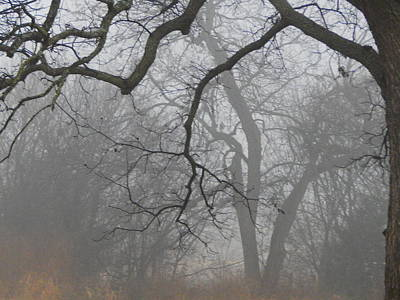 Photograph - Morning Fog In The Pecan Bottom by Virginia Kay White