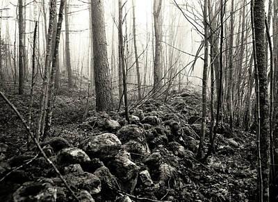 Target Threshold Nature - Morning Fog by Jarmo Honkanen