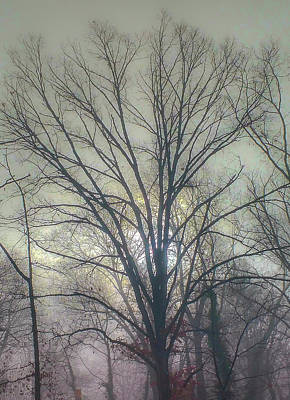 Photograph - Morning Fog Northern Virginia by Jim Moore