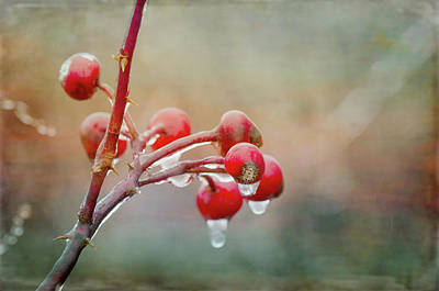 Photograph - Morning Freeze by Susan Capuano