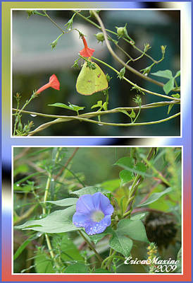 Art Print featuring the photograph Morning Glories And Butterfly by EricaMaxine  Price