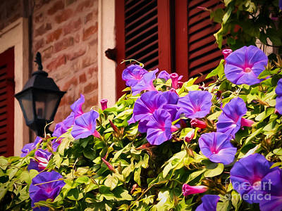 Photograph - Morning Glories In Nola by Kathleen K Parker