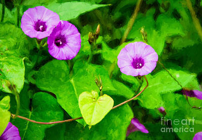 Photograph - Morning Glories by Kathleen K Parker