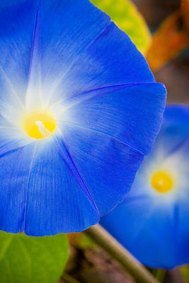 Photograph - Morning Glories by Utah Images