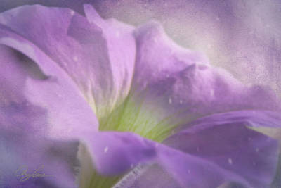Photograph - Morning Glory by Ann Lauwers