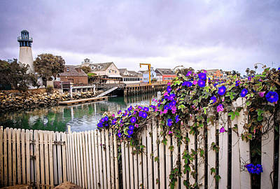 Photograph - Morning Glory At The Harbor by Lynn Bauer
