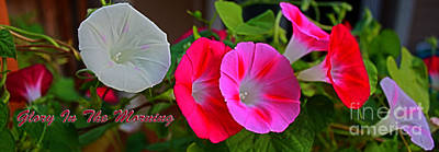 Photograph - Morning Glory Banner by Barbara Dean