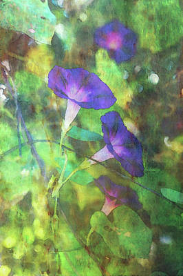 Photograph - Morning Glory Impression 4405 Idp_2 by Steven Ward