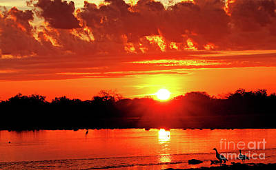 Photograph - Morning Glory, Namibia by Wibke W