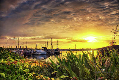 Photograph - Morning Glory On The Matanzas River by Joedes Photography