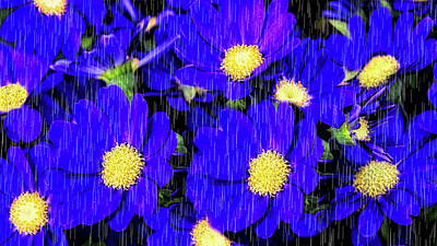 Photograph - Morning Glory Rain by Pat Cook