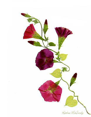 Morning Star Mixed Media - Morning Glory Vine by Kathie McCurdy