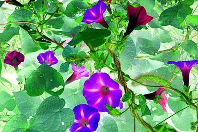Photograph - Morning Glory Vines 1 by Marianne Dow