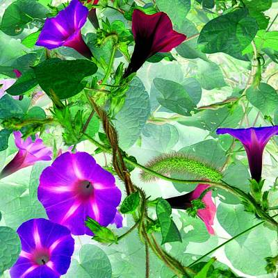 Photograph - Morning Glory Vines 2 by Marianne Dow