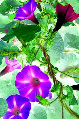 Photograph - Morning Glory Vines 3 by Marianne Dow