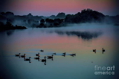 Photograph - Morning Glow by Elizabeth Winter