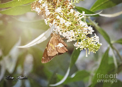 Photograph - Morning Glow by Melissa Messick