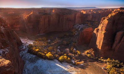 Trees Photograph - Morning Gold by Philip Shultz