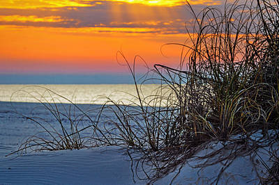 Photograph - Morning Grasses On The Beach by Michael Thomas