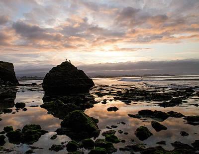 Photograph - Morning Gulls by Lora Lee Chapman