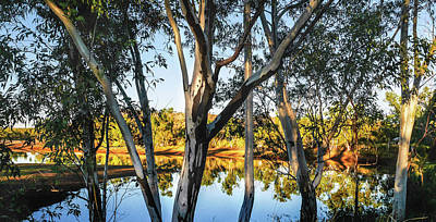 Photograph - Morning Gum Trees In The Outback by Lexa Harpell