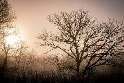 Photograph - Morning Has Broken by Annette Berglund