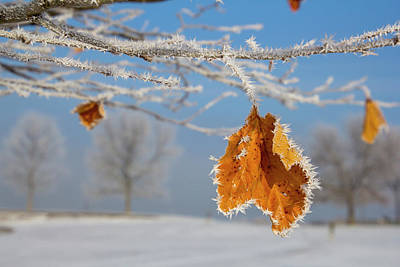 Photograph - Morning Hoarfrost On A Leaf by Eleanor Caputo