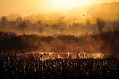 Swamp Photograph - Morning Impression by Przemyslaw Wielicki
