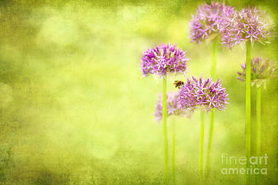 Morning In The Garden Art Print