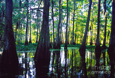 Cypress Swamp Photograph - Morning In The Swamp by Thomas R Fletcher