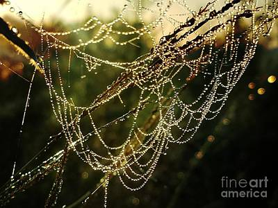 Photograph - Morning Jewels by Maria Urso
